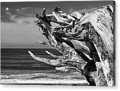Wind Drift Acrylic Print