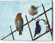 Acrylic Print featuring the mixed media Winter Birds by Eva Lechner