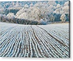 Winter Field, Little Rissington, Gloucestershire Acrylic Print by David Ross