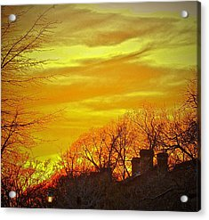 Acrylic Print featuring the photograph Winter Gold by Don Moore