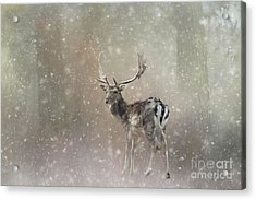 Acrylic Print featuring the mixed media Winter In The Woods by Eva Lechner