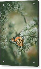Winter Monarch Acrylic Print