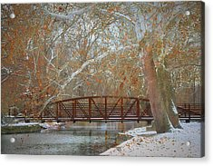 Winter Sycamores Acrylic Print