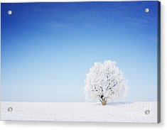 Winter Tree In A Field With Blue Sky Acrylic Print