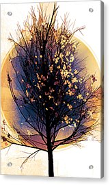 Winter Tree In Golds  Acrylic Print