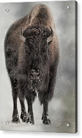 Winter Warrior Acrylic Print