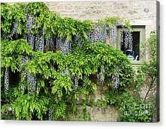 Wisteria On A Cotswold Stone House Acrylic Print by Tim Gainey