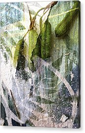 Wistful Might Have Been Acrylic Print