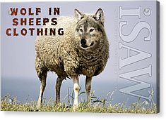 Wolf In Sheeps Clothing Acrylic Print