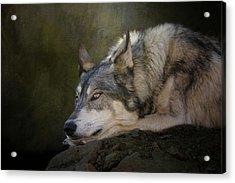 Wolf Watch Acrylic Print