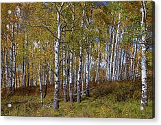 Acrylic Print featuring the photograph Wonders Of The Wilderness by James BO Insogna