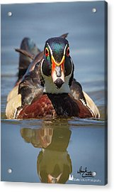 Wood Duck Face First Acrylic Print