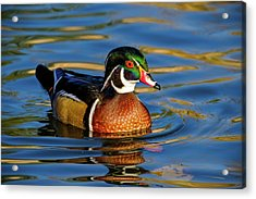 Acrylic Print featuring the photograph Wood Duck by Nicole Young