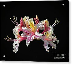 Wood Lily On Black Acrylic Print