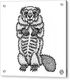 Woodchuck Acrylic Print