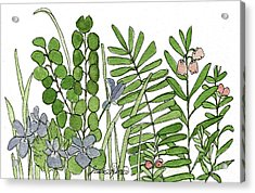 Woodland Ferns Violets Nature Illustration Acrylic Print