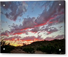 Acrylic Print featuring the photograph Y Cactus Sunset  11 by Judy Kennedy