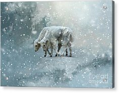 Acrylic Print featuring the mixed media Yaks Calves In A Snowstorm by Eva Lechner