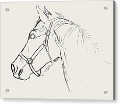 Yearling White Acrylic Print