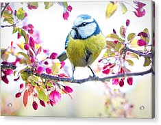 Yellow Blue Bird With Flowers Acrylic Print