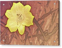 Yellow Day Lily Stencil On Sandstone Acrylic Print