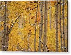 Yellow Forest Acrylic Print by Leland D Howard