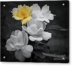 Yellow Rose Cluster Partial Color Acrylic Print