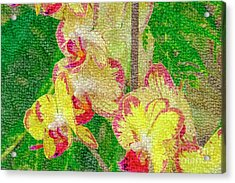 Yellow/rouge Orchids Acrylic Print
