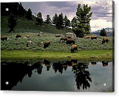Yellowstone Views Acrylic Print