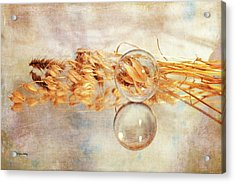 Acrylic Print featuring the photograph Yesterday's Seeds by Randi Grace Nilsberg
