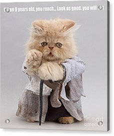 Acrylic Print featuring the photograph Yoda Cat by Warren Photographic