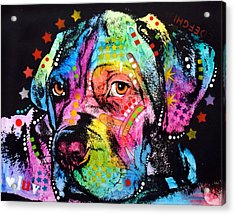 Young Mastiff Acrylic Print by Dean Russo Art