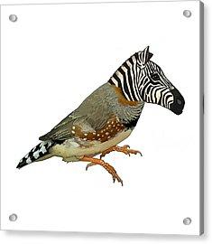 Z Is For Zebra Finch Thats Not A Zebra Finch Acrylic Print