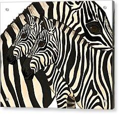 Z Is For Zebras Acrylic Print