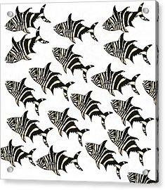 Zebra Fish 7 Acrylic Print