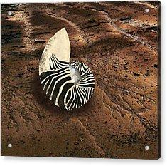 Zebra Nautilus Shell On The Sand Acrylic Print