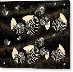 Zebra Pattern Nautilus Shells6 Acrylic Print