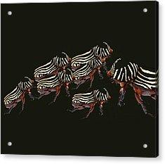 Zebra Pattern Rhinoceros Beetle 3 Acrylic Print