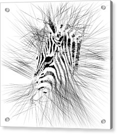 Acrylic Print featuring the digital art Zebrart by ISAW Company