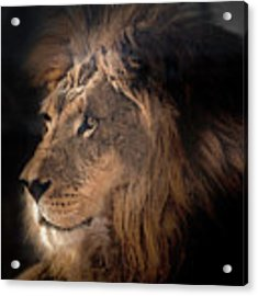 Lion King Of The Jungle Acrylic Print by James Sage