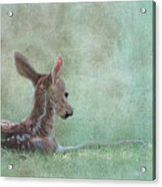 Tranquil Acrylic Print by Sally Banfill