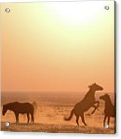 Wild Horse Sunset Acrylic Print by Wesley Aston