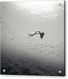 140907-2671 Acrylic Print by Enric Gener