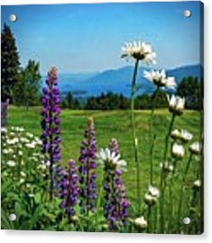 A June Day In Heaven Acrylic Print by Kendall McKernon