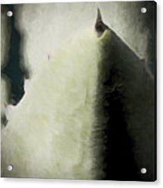 Agave Impression Four Acrylic Print by Carol Leigh