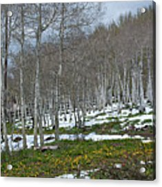 Approaching Spring In The Aspen Forest Acrylic Print by Cascade Colors