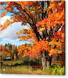 Autumn Glory Acrylic Print by Gigi Dequanne