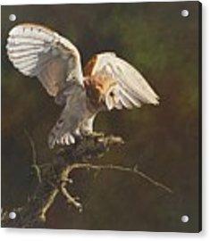 Barn Owl Acrylic Print by Alan M Hunt