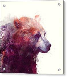 Bear // Calm Acrylic Print by Amy Hamilton