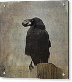 Beware Of Crows Acrylic Print by Sally Banfill